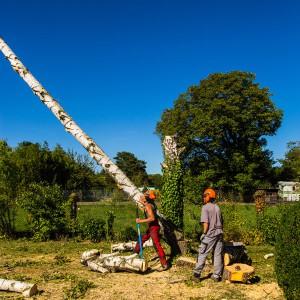 Abattage d'arbre à Colmar