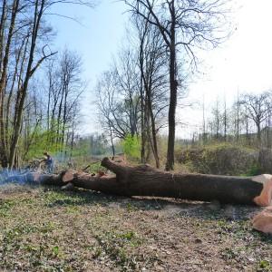 Abattage et découpe des arbres