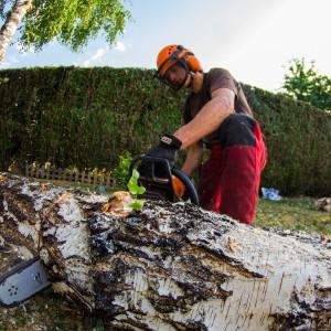 Découpe d'arbre à Colmar
